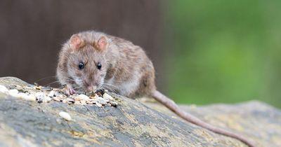 Forscher warnen vor gefährlichem Hirn-Parasit