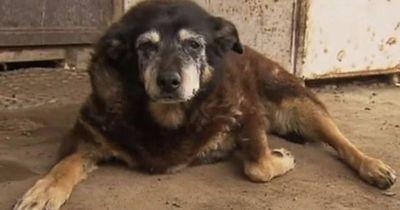 Das ist der wohl älteste Hund der Welt