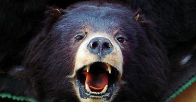 Diese Frau entdeckt einen ausgewachsenen Schwarzbären in ihrer Garage