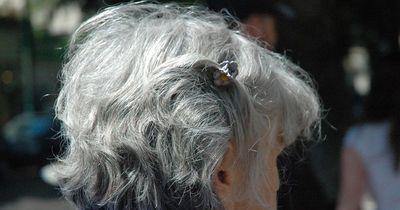 Das bedeuten graue Haare bei Tieren!