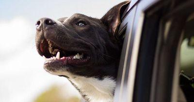 So gefährlich ist das Autofahren mit dem Haustier!