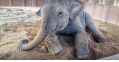 Dieser Baby-Elefant hatte einen schweren Start ins Leben