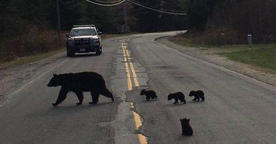 Diese Polizisten sind bärenstarke Retter!