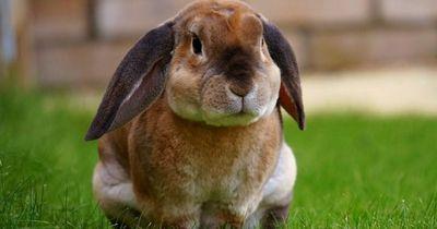 Das sind die Gründe, wenn Kaninchen aggressiv sind