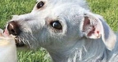 Diese genialen Hacks sollte jeder Hundebesitzer kennen!