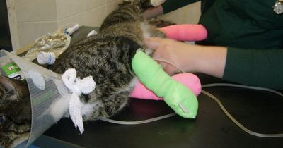 Deshalb wird diese Katze für immer im Tierheim bleiben müssen