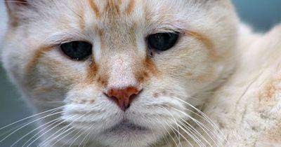 Deine Katze will nicht fressen?