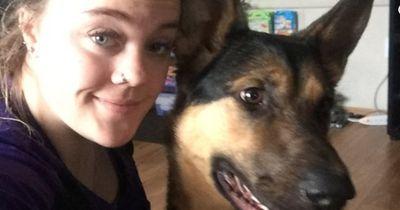 Sie füttert einen Hund im Tierheim - und plötzlich steht er bei ihr vor der Tür!