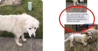 Diese Mutter denkt ihr Hund sei weg gelaufen