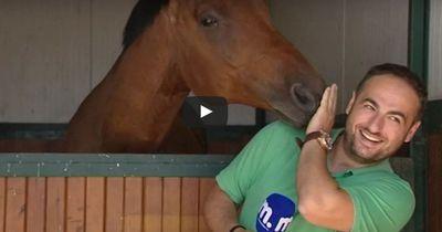 Das Pferd soll interviewt werden, doch es hat andere Pläne