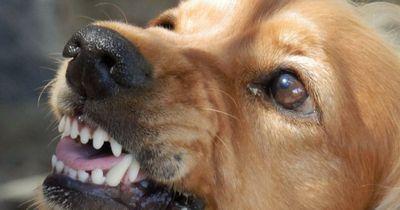 Dein Hund hat Aggressionsprobleme?