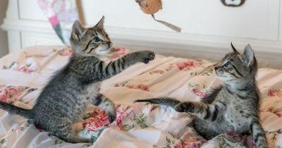Deswegen liebt deine Katze Baldrian!