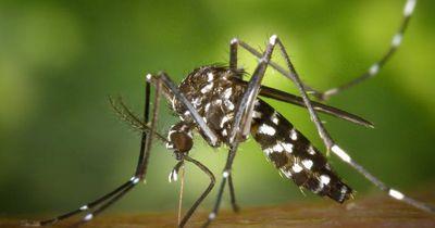 Wenn du das machst, wirst du eher von Mücken gestochen!