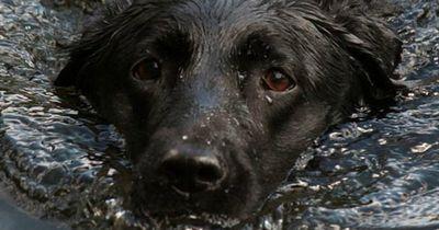 Für ihren Hund riskierte sie ihr Leben