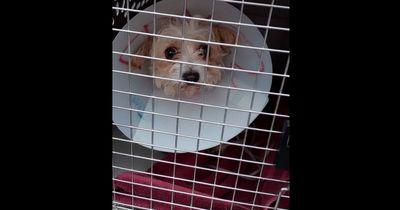 Körperlich behinderte Hunde haben keine Chance im Tierheim, bis jemand eine fantastische Idee hatte