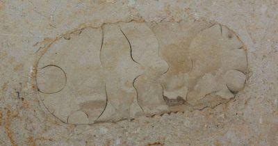 Dieser Junge findet ein 1,2 Millionen altes Fossil