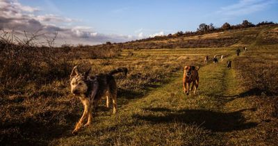 Vom Wolf zum Hund: So entstanden heutige Hunderassen