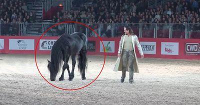Diese Show begeistert alle Pferdefans