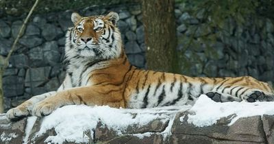 Abenteuerliche Geburt in deutschem Zoo