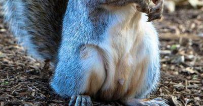 Seltenes Eichhörnchen gesichtet