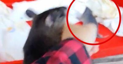 Ratte nimmt Mensch bei der Hand, um ihr etwas zu zeigen