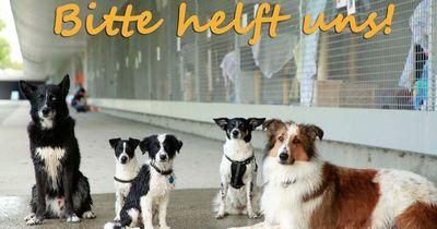 Dem Berliner Tierheim droht die Schließung - aber die Berliner reagieren