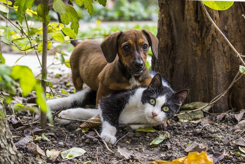 Katzen und Hunde sind mitverantwortlich für den Klimawandel