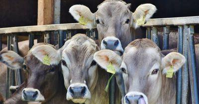 Die traurige Realität: So geht es Nutztieren in Deutschland
