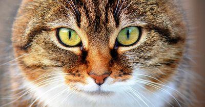 Unglaubliche Fakten über Katzen