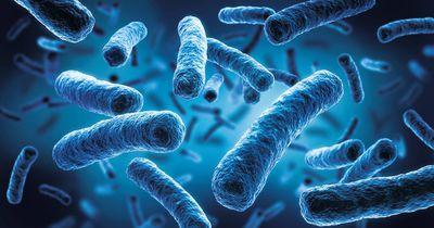 Mit diesen gefährlichen Bakterien kann man sich beim Baden anstecken