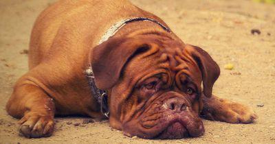 Als sein Hund stirbt, erweist er ihm eine ganz besondere letzte Ehre