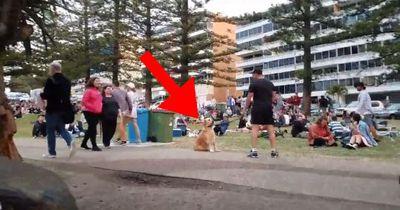 Dieser Hund hat eine sehr witzige Reaktion, als er nach Hause soll