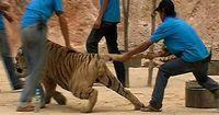 So furchtbar ergeht es Tieren in der Tourismus-Industrie