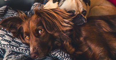 Deswegen sollte jeder Haustierbesitzer Minze daheim haben!