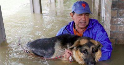 "So hart traf Hurrikan ""Harvey"" Haustiere"