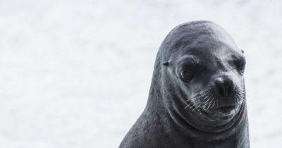 Tierschützer protestieren gegen offizielle Seehund-Jäger