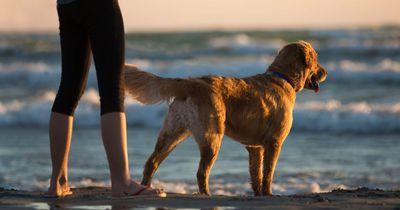 Ihr Hund ist blind - doch als er das Mädchen schreien hört, ist ihm das egal
