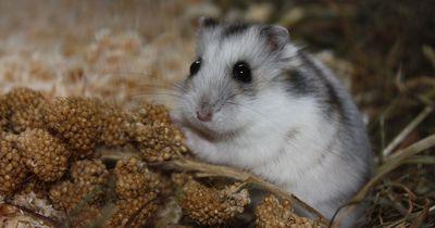 Eine verrückte Geschichte: Dieser Hamster klebte an seinem Käfig fest