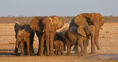 Als der Elefant diesen Mann sieht, stürmt er sofort auf ihn los